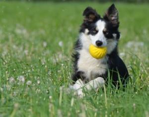 Ball aus ifetch Ballwurfmaschine